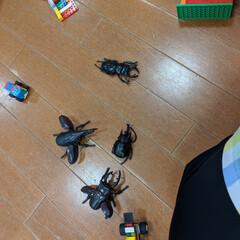 「虫が嫌いなのに・・・子ども達がオモチャを…」(1枚目)