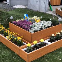 箱庭/DIY 箱庭製作。 中央に睡蓮鉢を入れてメダカも…