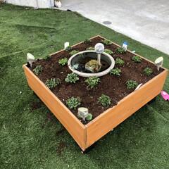 ガーデニング/ビオトープ/箱庭風/DIY 今年も自作箱庭をスタート! 昨年アリッサ…
