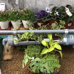 ビオトープ/メダカ/ガーデニング/DIY 今年の庭づくりはビオトープから。 床砂は…