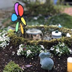 ビオトープ/セリア/ガーデニング/メダカ/箱庭/DIY/... 箱庭中央にある睡蓮鉢の縁が気になったので…