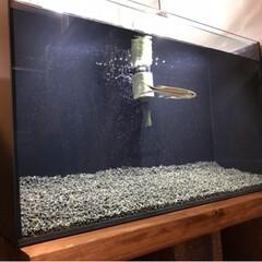 アクアリウム/水槽のある暮らし/水槽/DIY/ペット/インテリア/... 今回は趣味のアクアリウムです!🐠  正直…(2枚目)
