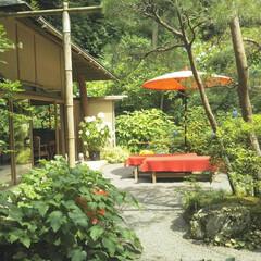 あじさい/明月院/風景/旅行/旅 こちらの写真は6月に鎌倉へ旅行に行った時…(2枚目)