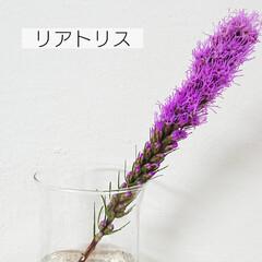 花好き/切り花/定期便/bloomeelife/花のある生活/花のある暮らし/... *お花の定期便* Bloomee LIF…(5枚目)