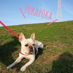 公園/おさんぽ/ペット/犬 今日はとっても良いお天気だったのでお友達…