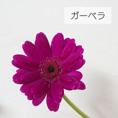 花好き/切り花/定期便/bloomeelife/花のある生活/花のある暮らし/... *お花の定期便* Bloomee LIF…(4枚目)
