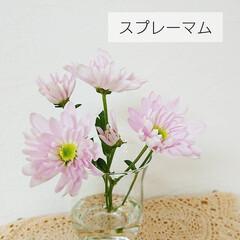花好き/切り花/定期便/bloomeelife/花のある生活/花のある暮らし/... *お花の定期便* Bloomee LIF…(3枚目)
