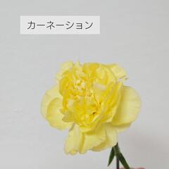 花好き/切り花/定期便/bloomeelife/花のある生活/花のある暮らし/... *お花の定期便* Bloomee LIF…(6枚目)