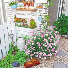 パテーションdiy/満開/マーガレット/ガーデン雑貨/ガーデニング/玄関アプローチ/... 先週のpicです✨ 玄関前のマーガレット…