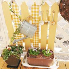 花のある生活/花のある暮らし/花/ウッドデッキ/チェック柄/ガーデンフェンス/... こんばんは~😊✨  端材がいっぱい貯まっ…(1枚目)