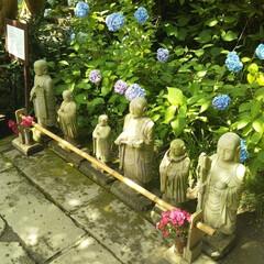 あじさい/明月院/風景/旅行/旅 こちらの写真は6月に鎌倉へ旅行に行った時…(5枚目)