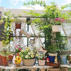 DIYガーデン/ウッドデッキ/花のある生活/花のある暮らし/花/庭/... 今日は久しぶりのお天気でした~✨  お天…