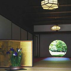 あじさい/明月院/風景/旅行/旅 こちらの写真は6月に鎌倉へ旅行に行った時…(1枚目)