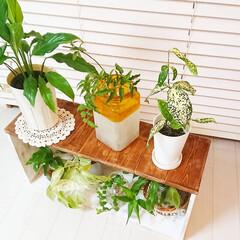 グリーンのある生活/グリーンのある暮らし/母の日/端材DIY/端材/棚DIY/... 先日の母の日に作った棚です😌💓  今年は…(2枚目)