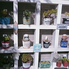 庭づくり/ツーバイフォー材/DIY/ガーデニング/多肉植物のある暮らし/多肉棚/... 多肉棚diy