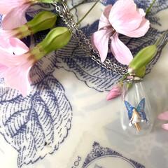 シースルーの翅の妖精/妖精標本商会/minne/雑貨/手作りアクセ 先日はminneサイト様にて『シースルー…