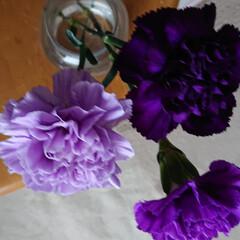 紫苑/ムーンダスト/アプローズ/青い花/暮らし 青い花は間もなく紫陽花が盛りですが、アプ…(2枚目)