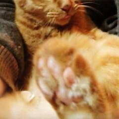"""ピンク これもピンク❣️ 猫の肉球ฅ"""""""