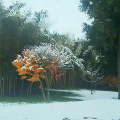 紅葉/雪景色/風景 たまたま地元で撮った写真です。 紅葉に雪…