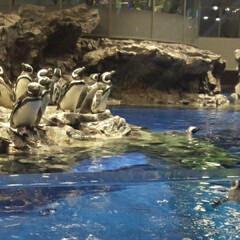 すみだ水族館/スカイツリー/東京/おでかけ スカイツリーの すみだ水族館。 たくさん…