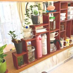 調味料/棚/キッチン雑貨/DIY/インテリア/家具/... キッチンカウンターに杉板で棚を作成 ベラ…