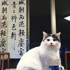 夜の1枚/夜/ネコ/ねこ/猫好き/猫屋敷/... こんばんは🐈🌙 たまには、ちょっとカッコ…