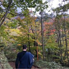 紅葉/山登り/登山/アウトドア/秋 大菩薩嶺、登ってきました🏔 秋の訪れが感…(3枚目)