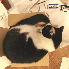 猫屋敷/フォロー大歓迎/ペット/ペット仲間募集/猫/にゃんこ同好会 うーん ちょっとはみ出てますねえ🤔