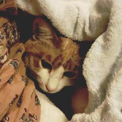おはよう/おはようの一枚/フォロー大歓迎/秋/ペット/猫/... おはようございます😊 今日は僕もお仕事お…