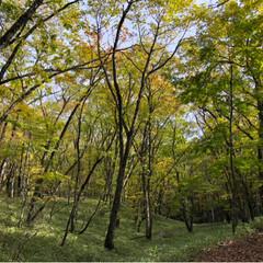 紅葉/山登り/登山/アウトドア/秋 大菩薩嶺、登ってきました🏔 秋の訪れが感…