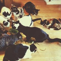 ねこ/ネコ/実家/猫屋敷/ペット/猫 実家の猫たち。僕がかつて住んでいた部屋は…