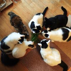 おはようの1枚/おはよう/🍘/猫のいる暮らし/ペット仲間募集中/ねこ好き/... おはようございます😽☀️ 今日はあいにく…