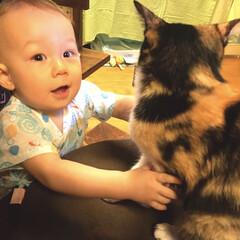 猫屋敷/ペット/ペット仲間募集/猫/にゃんこ同好会 甥っ子とにゃんこ👶🐈 何にでも興味津々の…
