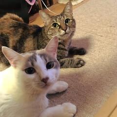 ネコ好き/猫屋敷/ねこ/ペット/猫/にゃんこ同好会 猫好きの仲間がほしいなあと、地味に使って…