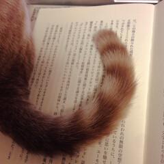 お邪魔虫/愛猫家/猫屋敷/ネコ/ねこ/おうち/... 読書してるんだけどなあ〜😹