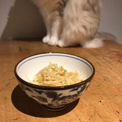 ちこり村/サラダコスモ/もやしレモン 昨日は家に帰って小腹が空いてたので、最近…
