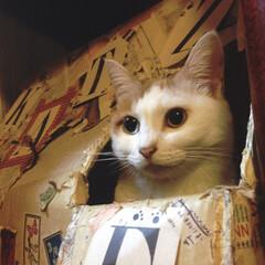 猫ハウス/猫屋敷/ペット/猫/ペット仲間募集/にゃんこ同好会 猫ハウスからこんにちは👀 にゃんこ用の小…