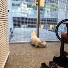おうち/玄関/フォロー大歓迎/ペット/ペット仲間募集/猫/... 朝からジローは外の世界に興味津々💡  で…