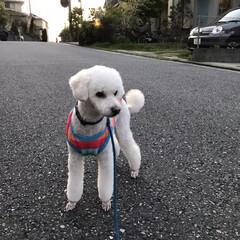犬用服 トリミング後は寒そうなので久しぶりに着せ…