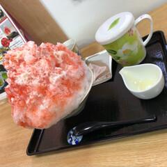 いちご/抹茶/かき氷 森の抹茶といちごかき氷! おさだ苑本店。 (2枚目)