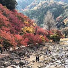 紅葉/香嵐渓/秋/風景/旅 香嵐渓行ってきましたー