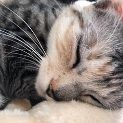 猫のいる暮らし 実家の猫がとっても可愛い(´`)はやく会…