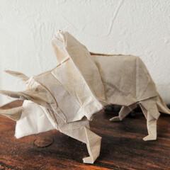 恐竜/リアル/折り紙/雑貨 久しぶりにリアル折り紙。 恐竜シリーズか…