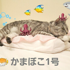 魚/海/ねこ/まーちゃん/かまぼこ/サーモン/... まーちゃん、さかなになる。