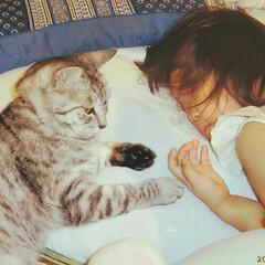 寝る/子供/添い寝/ねこ/まーちゃん まーちゃん添い寝🌸 自分からいったそうで…