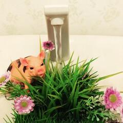 トイレのインテリア/トイレタンク/動物モチーフグッズ/雑貨 トイレに入るたびにブタちゃんが草を食べら…