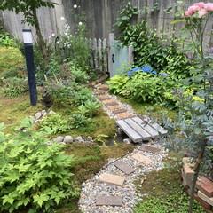 手作りの庭/メダカ池/小道/ガーデニング/DIY 小道とビオトープを作って、宿根草をメイン…