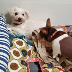 「私のベットはシングルサイズ。猫2匹と犬2…」(9枚目)