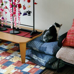 「私のベットはシングルサイズ。猫2匹と犬2…」(6枚目)