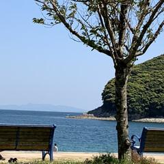 海岸 誰もいないかなぁと思い近くのビーチへ、意…(3枚目)